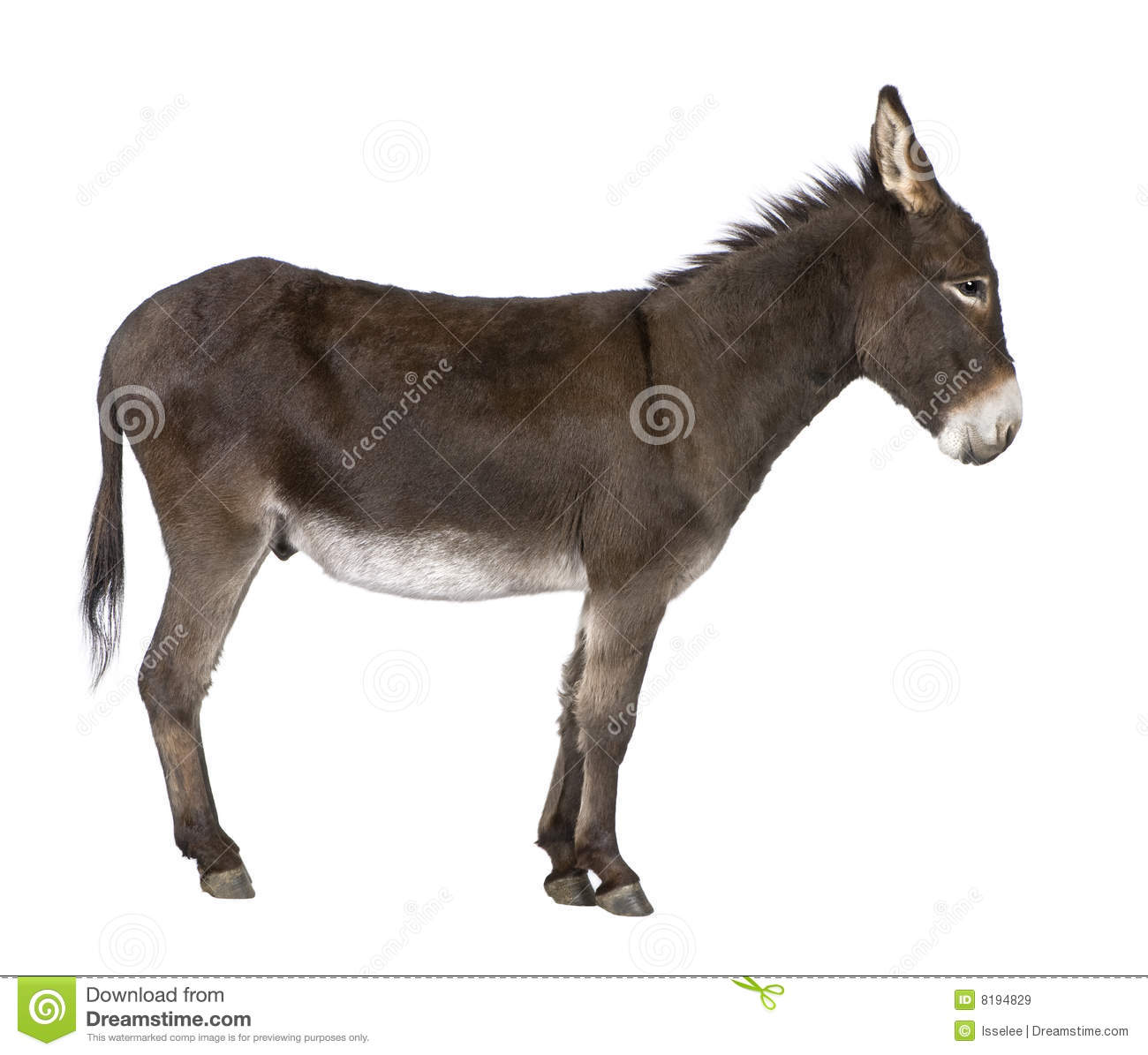 Donkey Pictures Kids Search