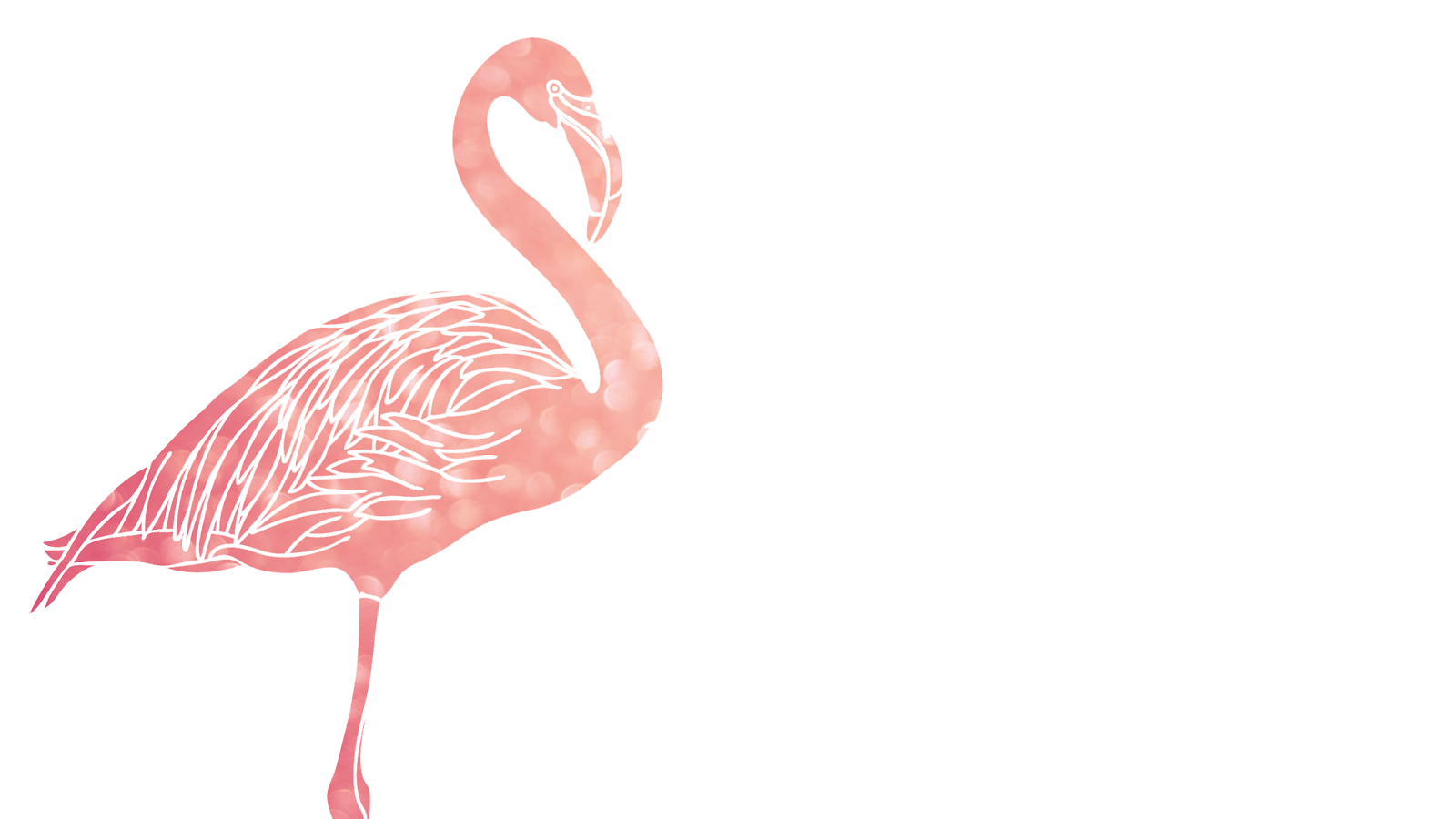 Flamingo Pictures Kids Search