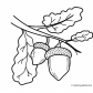 Acorn nature coloring page