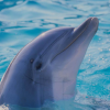 Pictures of dolphin