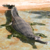 Pictures of gharial