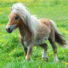 Pictures of pony