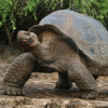 Pictures of tortoise